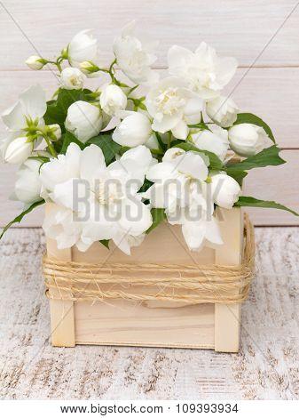 Philadelphus Coronarius Bouquet On The White Background