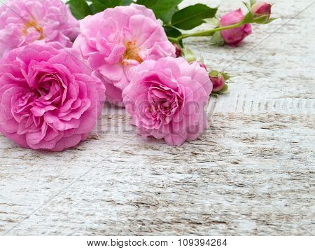 Antique Roses And Buds On The White Painted Board