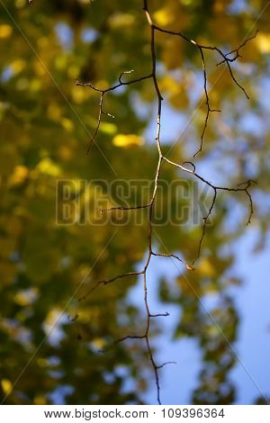 Naked Branch Over Autumn Foliage