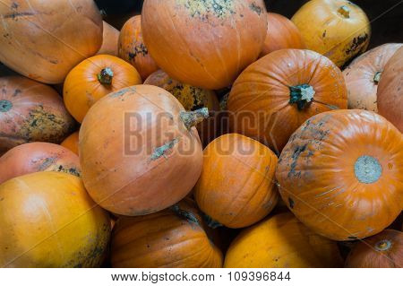 Pumpkins In A Big Bunch