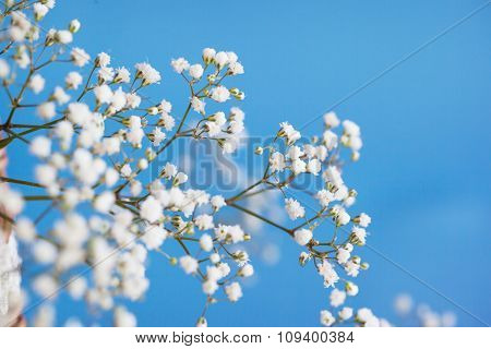 Gypsophila Paniculata, Light, Airy Masses Of Small White Flowers