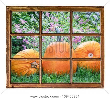 garden with pumpkins as seen from a sash window of old cabin