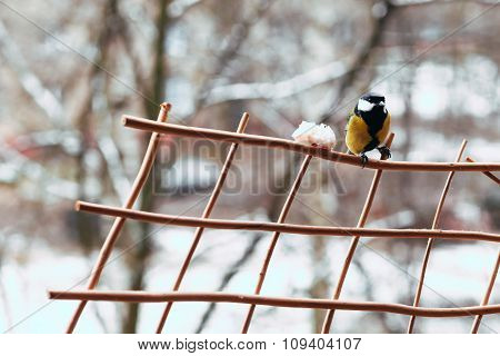 bullfinch and yellow belly