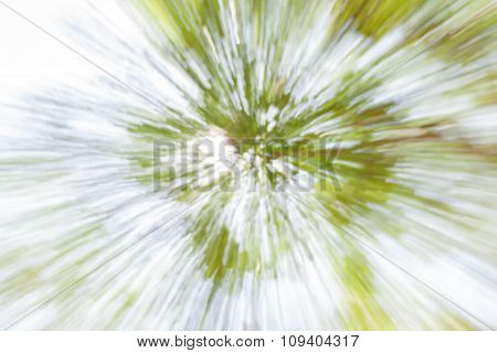 Green Foliage Blurred Background And Sunlight In Forest.
