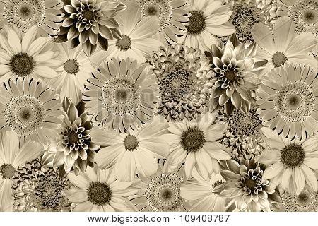 Vintage Background With Flowers Collage Mix Gerbera, Chrysanthemum, Dahlia, Primula, Decorative Sunf