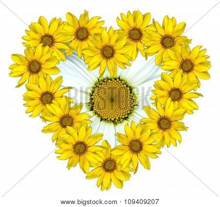 Heart Of Yellow Flowers Of Decorative Sunflowers Helinthus And White Daisy Flower Inside Isolated On