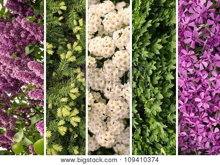 Collage Mix Of Herbs And Flowers Photoes Background
