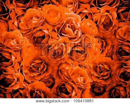 Bush Of Orange Rose Flowers Background High Contrasted With Vignetting Effect