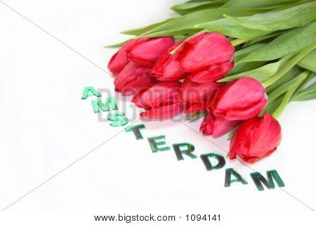 High Key Tulips Amsterdam