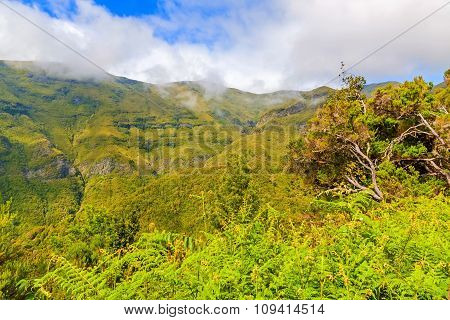 Green Nature Of Madeira
