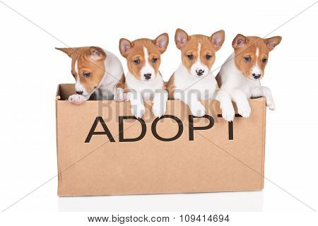 group of puppies in a box