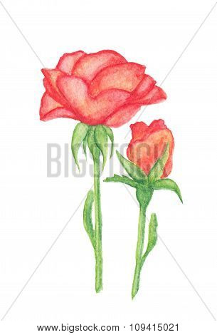 Orange Rose And Bud Watercolor Pencils Drawing