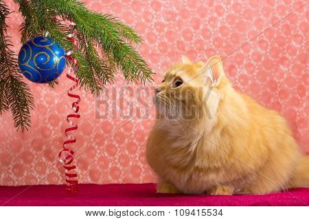Red Cat Under The Christmas Tree