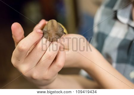 snail close-up on hands