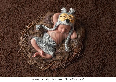 Sleeping Newborn Baby Boy Wearing An Owl Hat