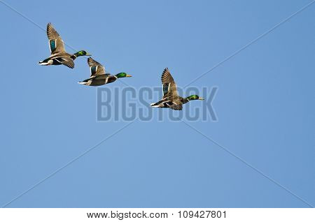 Three Mallard Ducks Flying In A Blue Sky
