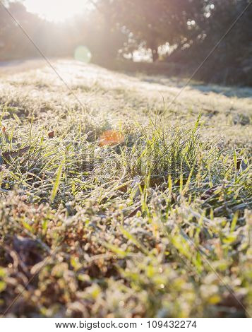 Hoarfrost Grass In Backlit. Solar Flare