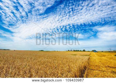 Field  In Summer Day