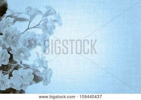 Sweet Color Flowers Of Kalanchoe Plant On Old Blue Cloth Texture Vintage Styled