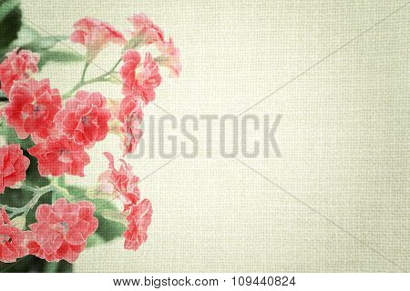 Bright Red Flowers Of Kalanchoe Plant On Old Cloth Texture Vintage Styled