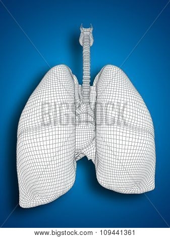 Concept or conceptual anatomical human man 3D wireframe mesh respiratory system  with lungs on blue background