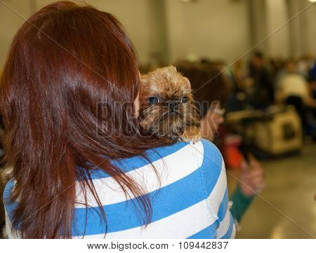 Woman holds on shoulder Brussels Griffon