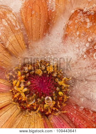Abstraction With Orange-red Flower