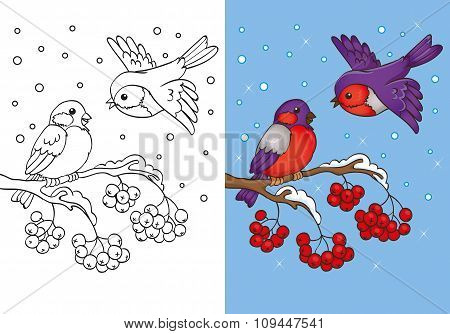 Coloring Book Of Bullfinches Sitting On Branch