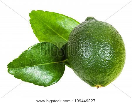 Fresh Green Kaffir Lime Fruit With Leaves Isolated