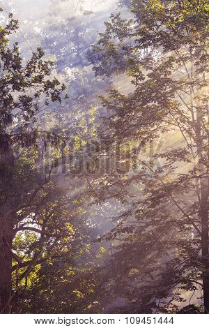 Morning Sunbeam In Forest With Smoke