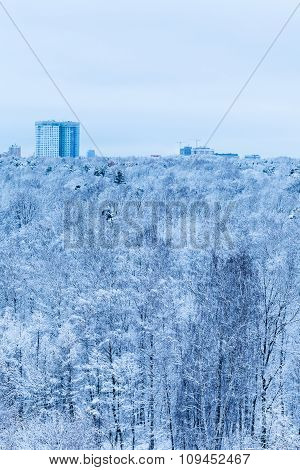 House And Snow Forest In Blue Cold Winter Morning