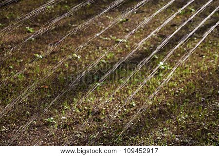 Sprinkler Watering The Soil With Sprouting Grass