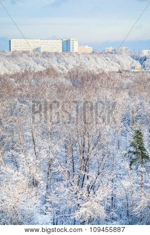 Snow Forest And City Houses In Winter