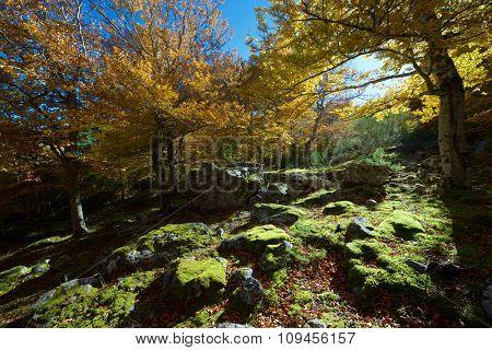 Moncayo Natural Park, Zaragoza, Aragon, Spain