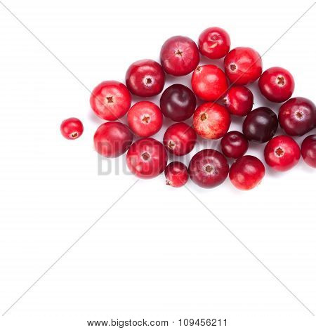 Cranberries fruits close-up. Red ripe detailed forest berries.