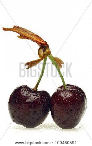 cherry on white