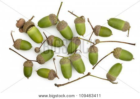 bunch of green acorns on white background