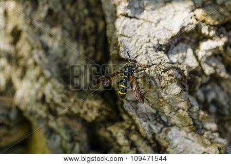Bee On The Rocks Macro