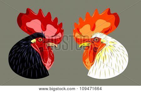 head (profile) of black and white cock
