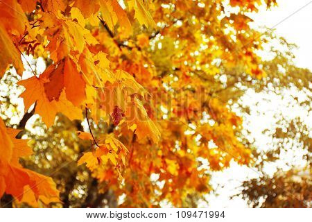 Trees with colourful leaves in the park