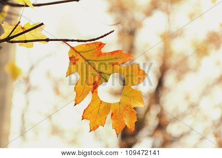 Autumn leaf with heart, outdoors