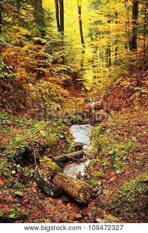 Autumn mountain forest