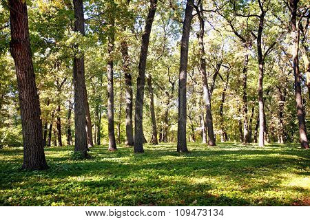 Many trees in deep forest