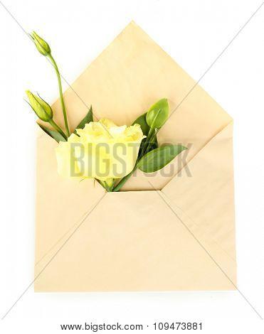 White eustoma in envelope, isolated on white