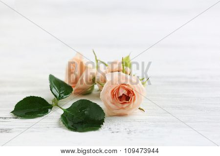 Branch of beautiful roses on white wooden background