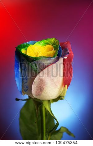 Beautiful painted rose on blue-red background