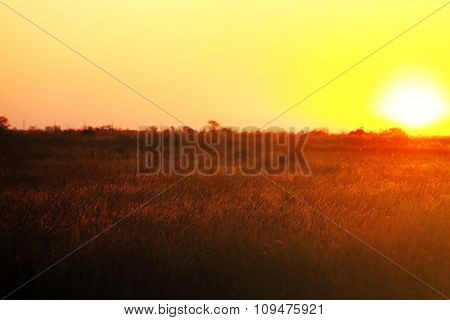 Beautiful sunrise on a field