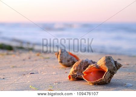 Beautiful seashells on the beach on sunrise background
