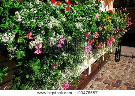 Colorful fresh flowers, outdoors