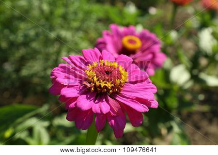 Beautiful flowers growing in garden